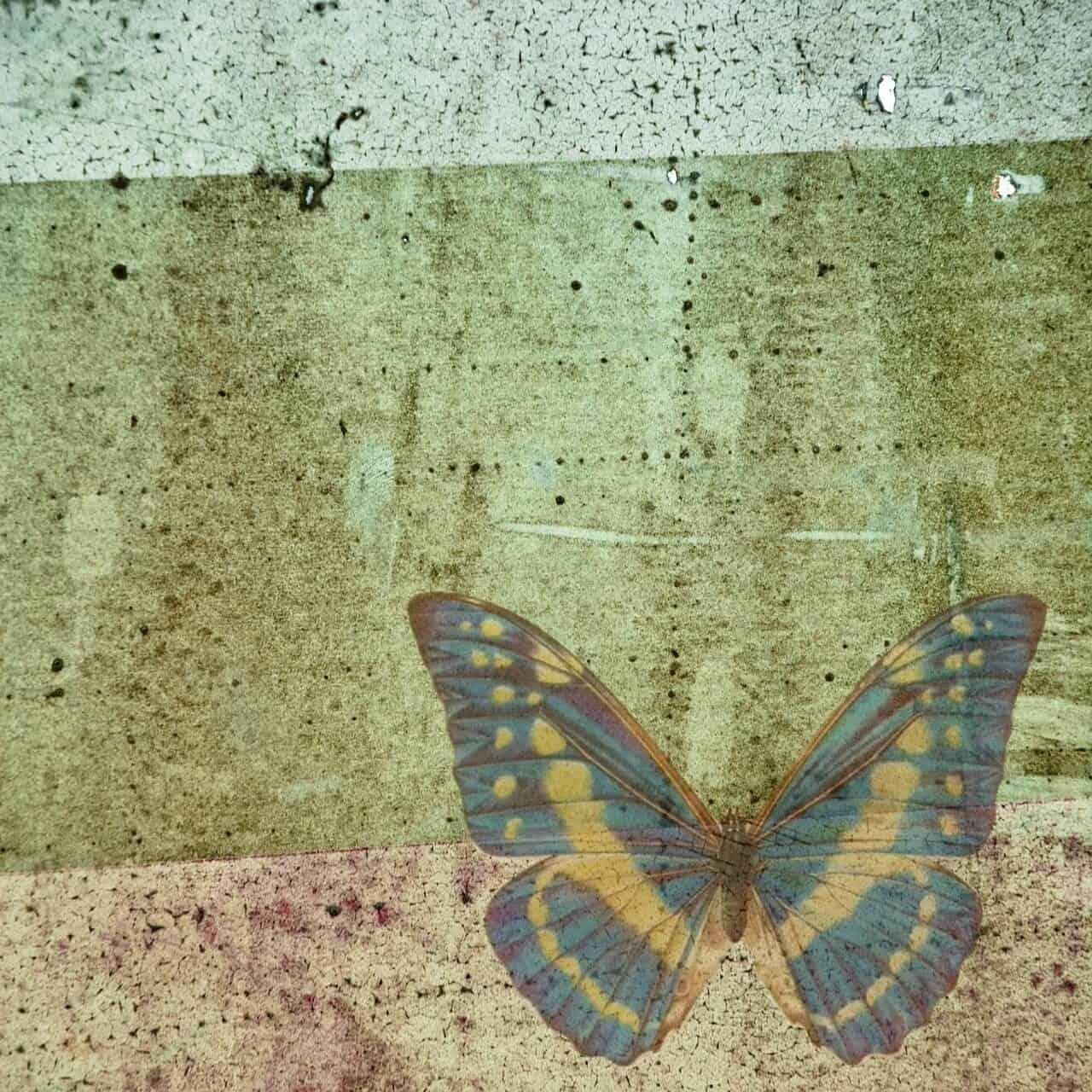 blau-gelber Schmetterling auf eine Wand gemalt - Bild zum Poetry Slam Text
